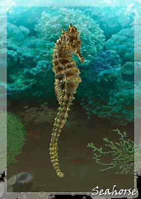 SEAHORSE - Motion and 3D Lenticular Postcard Greeting Card -
