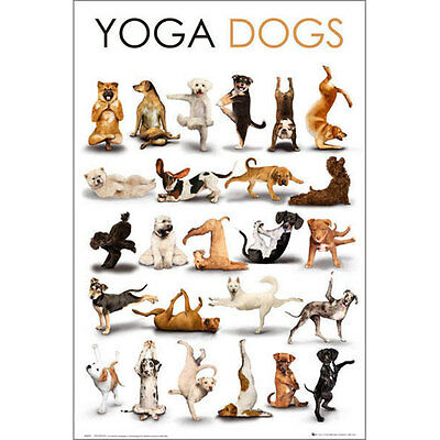Yoga Dogs POSTER 61x91cm NEW *Art Creative Photographic Cute Humour