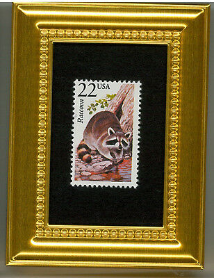 Raccoon - A Collectible Glass Framed Postage Masterpiece!