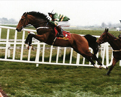 Istabraq 03 Ridden By Charlie Sw (Horse Racing) Photo Print Mug Or Photo Crystal
