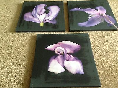 Set Of Three Purple Floral Canvas Pictures