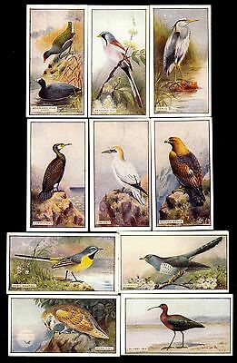 Scottish CWS cigarette cards - Feathered Favourites - 10 different