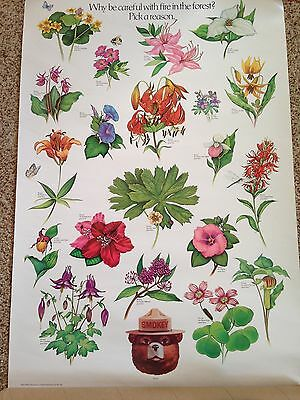 SMOKEY BEAR Poster WILD FLOWERS U.S. Department Agriculture Forest
