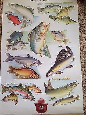 SMOKEY BEAR Poster FISH U.S. Department Agriculture Forester - Vivid Colors!