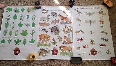 9 SMOKEY BEAR Posters Lizards Snakes Tracks Trees Leaves Edibles Insects Animals