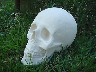 """NEW LATEX MOULD MOLD  + fibreglass casing LARGE  SKULL 7.5"""" HEIGHT x 10"""" LENGTH"""