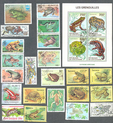 Frogs &  Toads 25 all different collection-Amphibians
