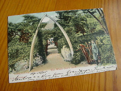 TOP3536 - Undivided Back Postcard - Gibraltar - Whale Jaw Arch 1915