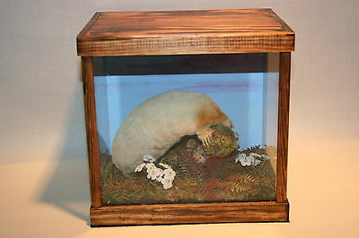 Taxidermy- Rare Albino Mole - Taxidermist - Stuffed - Mounted - Animal -