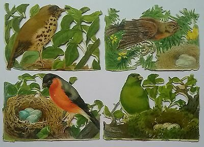 Lovely Victorian Largish Bird Scraps. 8&1/2x6cms