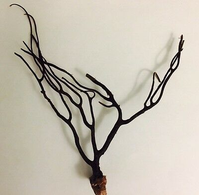 Vintage Black Coral Branch Healing Stones Chakra Alignments Jewelry Making