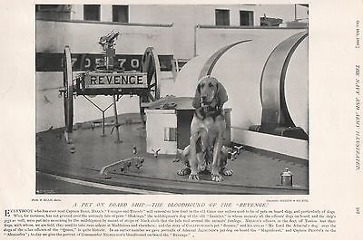1896 Military Print : A Pet On Board, Bloodhound Of The 'revenge'
