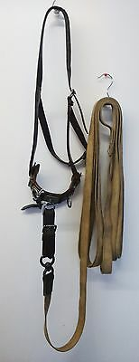 Leather Lunge Cavesson and lunge line - full size