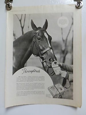Vintage 1937 Sweet Caporal Cigarettes Thoroughbreds  Advertising Print Ad.