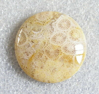 Natural Round Coral Fossil Cabochon/Cab d0839