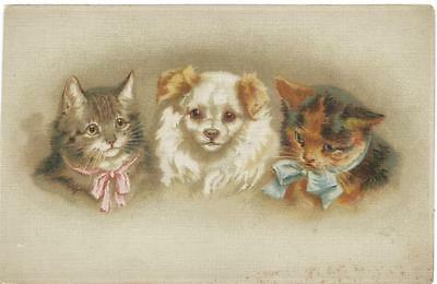 Helena Maguire ( unsign)  Two Cats with small white dog