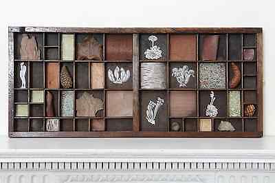 Quirky Vintage Printers Tray Artwork - Nature Theme Cabinet of Curiosities