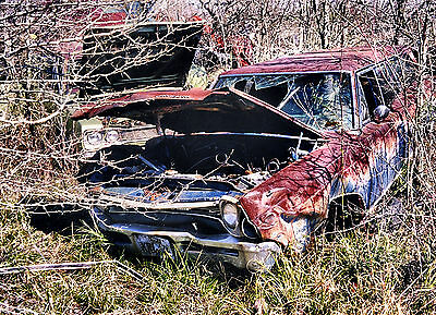 1960s Olds and Plymouth overtaken by nature junk yard 8 x 10 Photograph