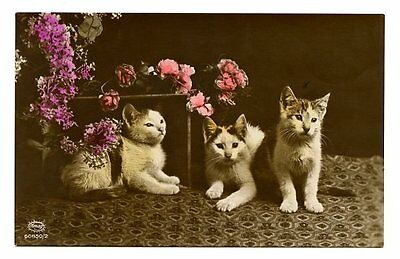vintage real photo postcard hand tinted kittens cats pose w flowers