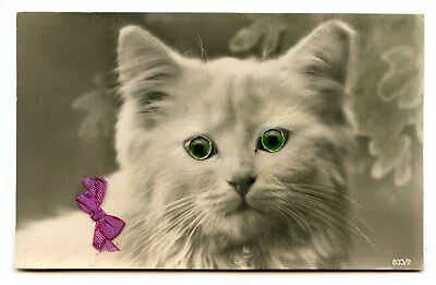 vintage cat postcard real photo beautiful white cat green glass eyes & bow