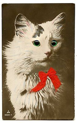 vintage cat postcard real photo beautiful longhaired cat green glass eyes & bow