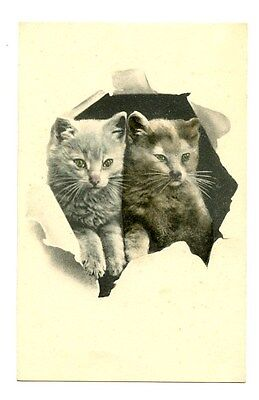 vintage cat postcard lovely pair cats kittens peeps through hole in card