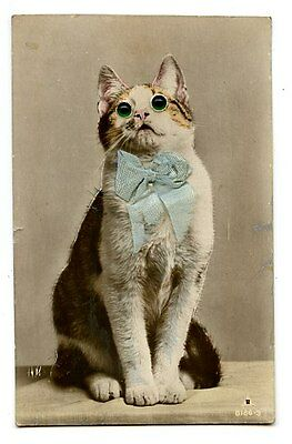 vintage cat postcard real photo lovely ginger white cat green glass eyes bow