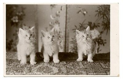 """vintage cat postcard beautiful trio white cats kittens """"Dossie's Daughters"""""""