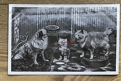 RP dog vintage postcard - pekingese and fluffy cats