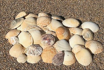 50g Assorted Natural Beach CORNISH Seashells Mixed Sea Shells Children Craft Mix