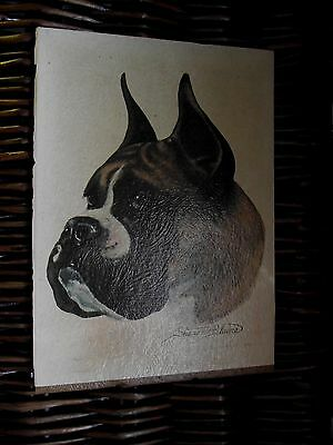 VTG Boxer Dog Print 1950'S SHARON BLAINE BOXER DOG 5  X 7  SIGNED Picture