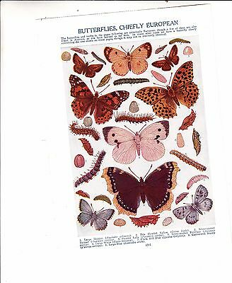 Beautiful Vintage Awesome Book Print/Colorful Butterflies Moths European/LOOK