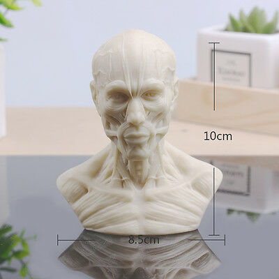 85*60*100mm Fashion Arts Human Anatomy Skull Muscle Replica Resin Model Medical