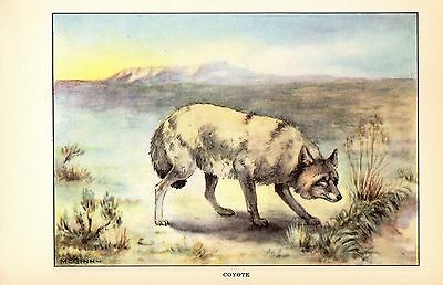 """1926 Vintage ANIMALS /""""BISON/"""" TODHUNTER GORGEOUS COLOR Art Print Plate Lithograph"""