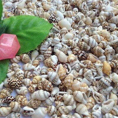 100 pcs Natural Seashells Sea Conch Shells DIY Crafts Decor Wedding Beach Home