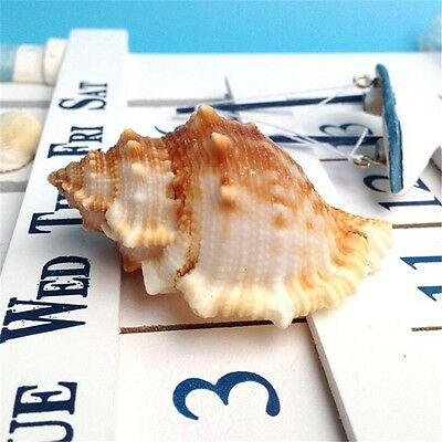 2 pcs Natural Spiral Seashells Sea Conch Frog Shell Beach Craft Decor Fish Tank