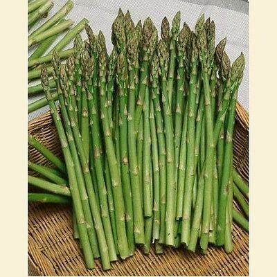 20 SEMI DI Asparagus officinalis var. Mary Washington