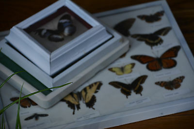 vintage real framed butterfly collection set of 4