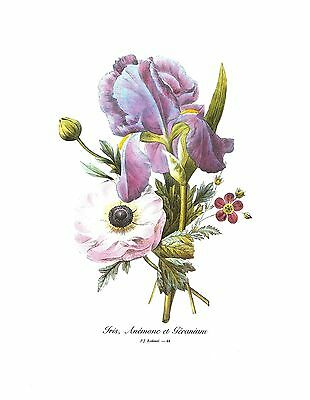 1991 Vintage REDOUTE FLOWER #59 SWEET IRIS or PALE Color Art Print Lithograph