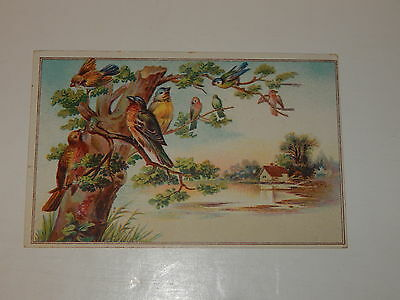 Vintage advertising trade card Lion Coffee Woolson Spice Mocha Java Birds