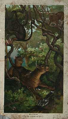 Vintage Victorian trade card Arbuckle Bros. Coffee NYC Puma
