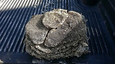 Taxidermy Decor - Natural Paper Wasp/hornets Nest- Inner Core Biology/science