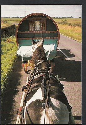 Romany Gypsy Postcard - Journey To Appleby Fair, Gypsy Times To Remember C1274