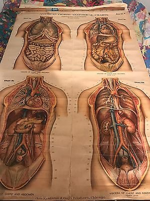Antique 1918 American Frohse  Viscera Of Chest And Abdomen Medical