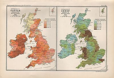 1904 Antique Map British Isles Distribution Of Cattle/sheep 2 Images