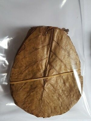 "10 grade A Indian almond catappa leaves 10-15cm 4-6"" shrimps betta discus"