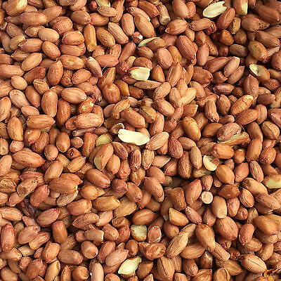10Kg Peanuts Premium Wild Bird Food, High Oil, Nutritious, Tested and Safe Feed