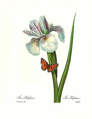 1991 Vintage REDOUTE FLOWER #51 RED CURRANT /& BUTTERFLY Color Art Lithograph