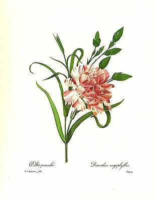 1991 Vintage REDOUTE FLOWER #76 WHITE LILY STUNNING Color Art Print Lithograph