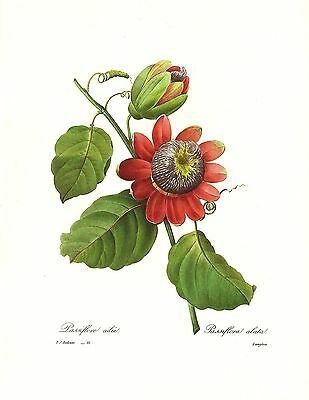 1991 Vintage REDOUTE FLOWER #45 GENTIANA /& BUTTERFLY Color Art Print Lithograph